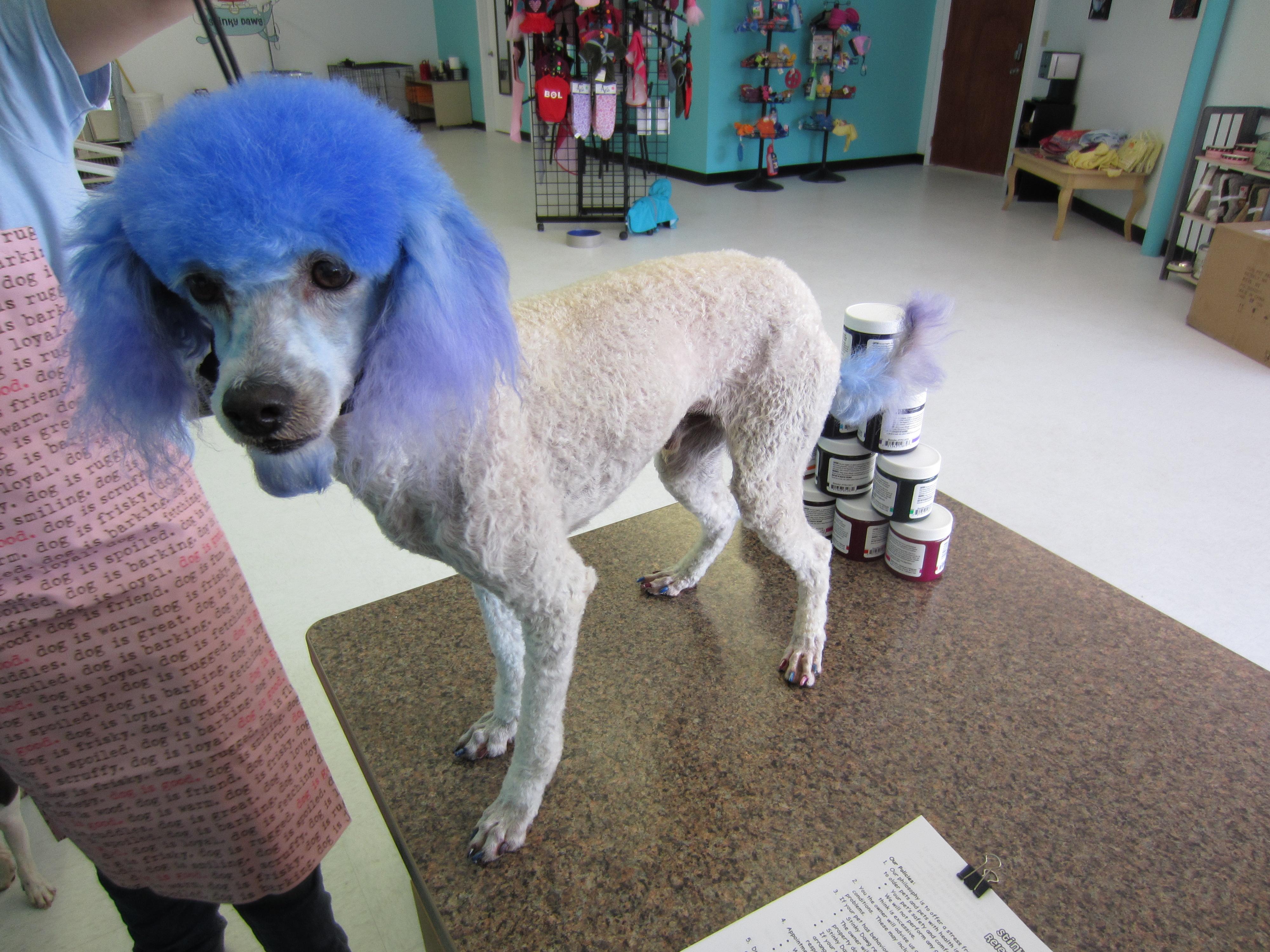 Igloo - after   Stinky Dawg Wash
